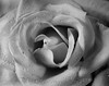 "<a href=""http://www.photographycorner.com/forum/showthread.php?t=798"">The Rose</a> by <a href=""http://www.photographycorner.com/forum/member.php?u=63"">Kara</a>"