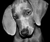 """<a href=""""http://www.photographycorner.com/forum/showthread.php?t=5690"""">Puppy Love</a> by <a href=""""http://www.photographycorner.com/forum/member.php?u=820"""">Cleo</a>"""