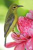 "<a href=""http://www.photographycorner.com/forum/showthread.php?t=16280"">Sunbird</a> by <a href=""http://www.photographycorner.com/forum/member.php?u=3140"">ndroo</a>"