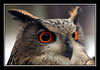 "<a href=""http://www.photographycorner.com/forum/showthread.php?t=20869"">Birds of Prey (Owl)</a> by <a href=""http://www.photographycorner.com/forum/member.php?u=3565"">Spicoli</a>"