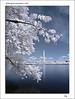 "<a href=""http://www.photographycorner.com/forum/showthread.php?t=42496"">Washington Monument (in IR)</a> by <a href=""http://www.photographycorner.com/forum/member.php?u=617"">JonMikal</a>"