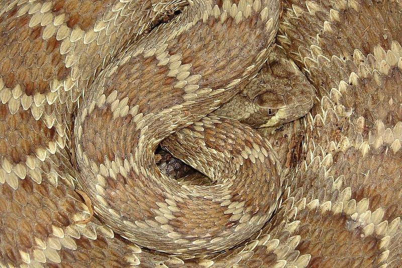 Mojave Closeup by katsnake