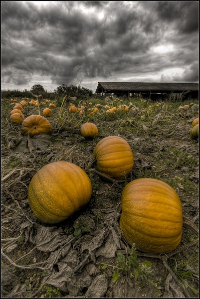 The Dark Side of Pumpkins by Oneof42