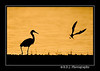 Sunset Dance (2)... by shutterbug2007