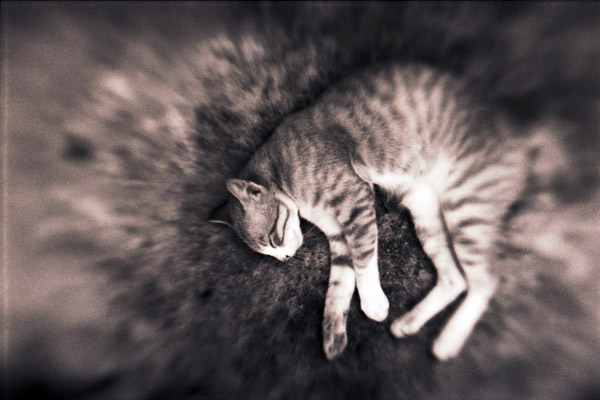 Kitty: Lensbabied by ndroo