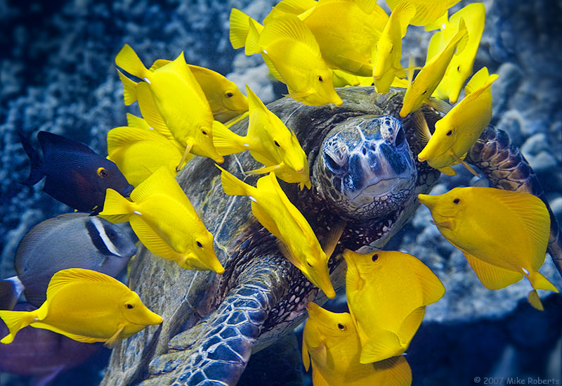 Lei of Tangs by Reeflections