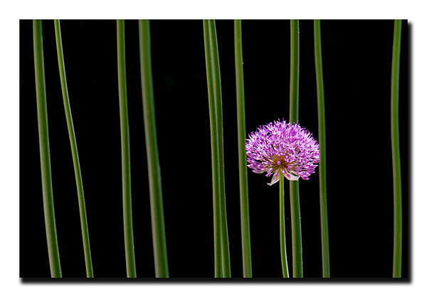Flowers by Spicoli