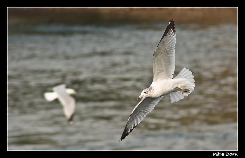 In Flight by Strutter
