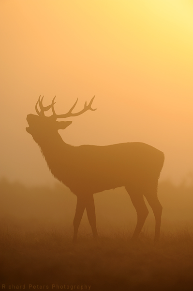 "<a href=""http://www.photographycorner.com/forum/showthread.php?t=78499"">Red Deer in Sunrise Mist</a> by <a href=""http://www.photographycorner.com/forum/member.php?u=5389"">richard peters</a>"
