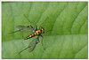 Colorful Fly by sachin