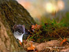 "<a href=""http://www.photographycorner.com/forum/showthread.php?t=88376"">Stoat</a> by <a href=""http://www.photographycorner.com/forum/member.php?u=6739"">realimage</a>"