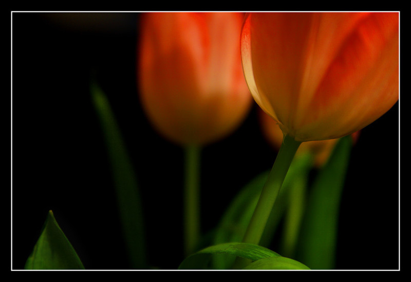 "<a href=""http://www.photographycorner.com/forum/showthread.php?t=81170"">Tulips</a> by <a href=""http://www.photographycorner.com/forum/member.php?u=8653"">Scott111184</a>"