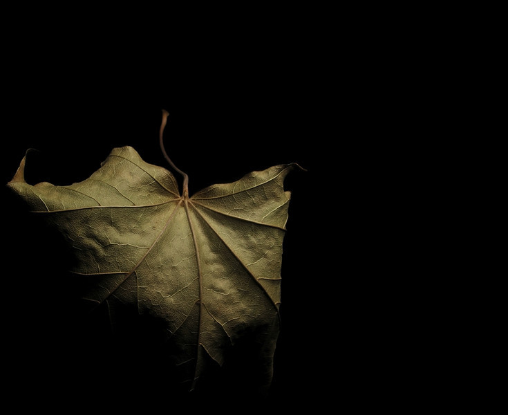 Leaf - One Year Later by Marcel T