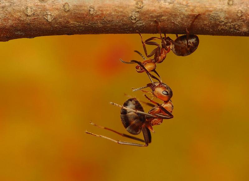 "<a href=""http://www.photographycorner.com/forum/showthread.php?t=87320"">Ants</a> by <a href=""http://www.photographycorner.com/forum/member.php?u=15570"">benas</a>"
