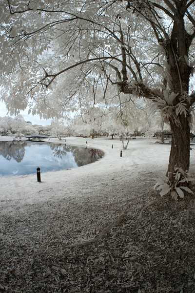 """<a href=""""http://www.photographycorner.com/forum/showthread.php?t=88917"""">Infrared in the Park Before the Rain</a> by <a href=""""http://www.photographycorner.com/forum/member.php?u=3140"""">ndroo</a>"""