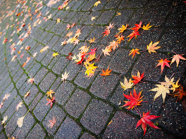 """<a href=""""http://www.photographycorner.com/forum/showthread.php?t=88903"""">Fallen Leaves</a> by <a href=""""http://www.photographycorner.com/forum/member.php?u=471"""">falldown</a>"""