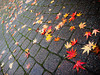 "<a href=""http://www.photographycorner.com/forum/showthread.php?t=88903"">Fallen Leaves</a> by <a href=""http://www.photographycorner.com/forum/member.php?u=471"">falldown</a>"