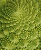"<a href=""http://www.photographycorner.com/forum/showthread.php?t=89041"">Romanesco Cauliflower</a> by <a href=""http://www.photographycorner.com/forum/member.php?u=14680"">Danielle_T</a>"