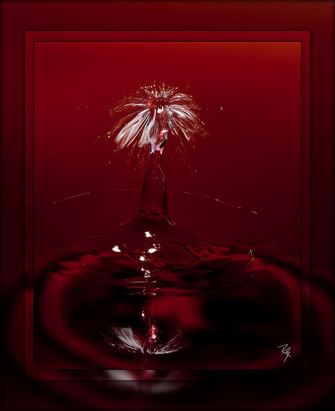 "<a href=""http://www.photographycorner.com/forum/showthread.php?t=92682"">Liquid Fireworks</a> by <a href=""http://www.photographycorner.com/forum/member.php?u=17281"">RandyBrogen</a>"