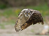 "<a href=""http://www.photographycorner.com/forum/showthread.php?t=92377"">Great Horned Owl - Incoming</a> by <a href=""http://www.photographycorner.com/forum/member.php?u=17303"">Vince Maidens</a>  WINNER of the <a href=""http://www.photographycorner.com/photograph-of-the-month/2010/07/great-horned-owl-incoming"">July 2010 Photograph of the Month</a> contest."
