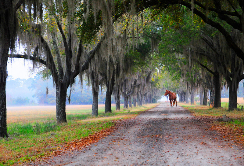 "<a href=""http://www.photographycorner.com/forum/showthread.php?t=91274"">Horses and the Avenue of Oaks on a Foggy Morning</a> by <a href=""http://www.photographycorner.com/forum/member.php?u=16544"">shutterbug99</a>"