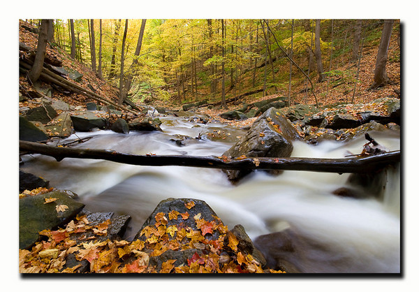 "<a href=""http://www.photographycorner.com/forum/showthread.php?t=94714"">Falling for Fall</a> by <a href=""http://www.photographycorner.com/forum/member.php?u=3565"">Spicoli</a>"