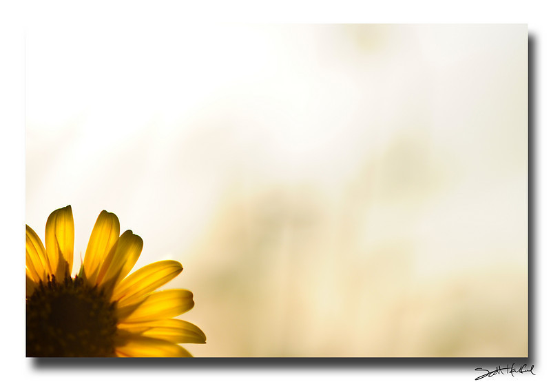 """<a href=""""http://www.photographycorner.com/forum/showthread.php?t=93698"""">Sunflower Simplicity</a> by <a href=""""http://www.photographycorner.com/forum/member.php?u=8653"""">Scott111184</a>"""
