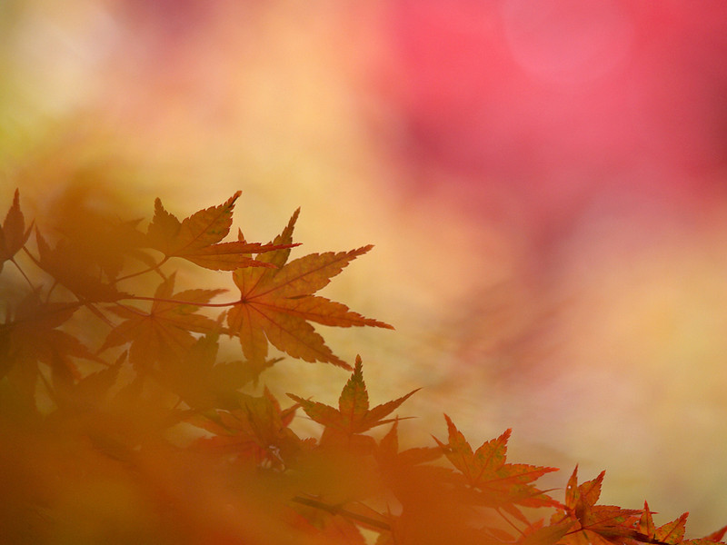 "<a href=""http://www.photographycorner.com/galleries/showphoto.php/photo/40346"">Autumn Color</a> by <a href=""http://www.photographycorner.com/forum/member.php?u=19309"">Putunetika</a>"