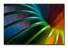 "<a href=""http://www.photographycorner.com/premiere-membership"">Rainbow (Premiere Project #99 Winner)</a> by <a href=""http://www.photographycorner.com/forum/member.php?u=3565"">Spicoli</a>"