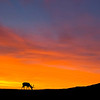 "<a href=""http://www.photographycorner.com/forum/showthread.php?t=99634"">Elk at Sunrise</a> by <a href=""http://www.photographycorner.com/forum/member.php?u=21022"">pixeldawg</a>"
