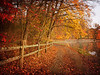 "<a href=""http://www.photographycorner.com/forum/showthread.php?t=101424"">Golden Path in the Woods</a> by <a href=""http://www.photographycorner.com/forum/member.php?u=19444"">Nancy C</a>   <font size=""+2"">WINNER of the  <a href=""http://www.photographycorner.com/photograph-of-the-month/2011/12/golden-path-in-the-woods"">December 2011 Photograph of the Month</a> contest!</font>"