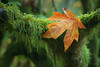 "<a href=""http://www.photographycorner.com/forum/showthread.php?t=101420"">Fall is Here...</a> by <a href=""http://www.photographycorner.com/forum/member.php?u=337"">squirl033</a>"