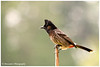 "<a href=""http://www.photographycorner.com/galleries/showphoto.php/photo/39424"">Birds of Corbett</a> by <a href=""http://www.photographycorner.com/forum/member.php?u=14043"">DCMAN363</a>"