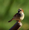 "<a href=""http://www.photographycorner.com/forum/showthread.php?t=95383"">His Eye is on the Sparrow...</a> by <a href=""http://www.photographycorner.com/forum/member.php?u=15722"">gjtoth</a>"