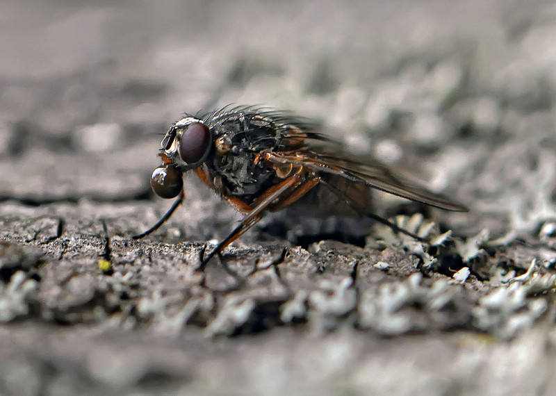"<a href=""http://www.photographycorner.com/forum/showthread.php?t=95674"">A Fly with a Bubble</a> by <a href=""http://www.photographycorner.com/forum/member.php?u=17567"">fotogv</a>"