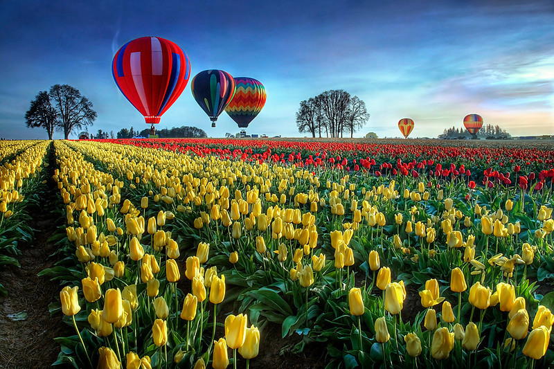 "<a href=""http://www.photographycorner.com/galleries/showphoto.php/photo/41230"">Hot Air Ballons Over Tulip Field</a> by <a href=""http://www.photographycorner.com/forum/member.php?u=17791"">william88</a>  <font size=""+2"">WINNER of the <a href=""http://www.photographycorner.com/photograph-of-the-month/2011/06/hot-air-balloons-over-tulip-field"">June 2011 Photograph of the Month</a> contest.</font>"