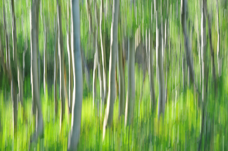 """<a href=""""http://www.photographycorner.com/forum/showthread.php?t=100590"""">Essence of a Sunlit Aspen Thicket</a> by <a href=""""http://www.photographycorner.com/forum/member.php?u=20518"""">Erich1B</a>"""
