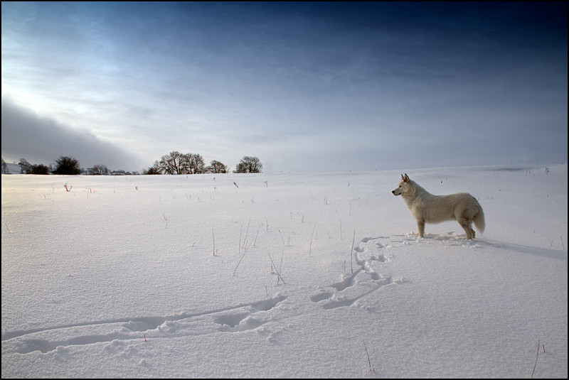 "<a href=""http://www.photographycorner.com/forum/showthread.php?t=103490"">A Dog in a Snowscape</a> by <a href=""http://www.photographycorner.com/forum/member.php?u=5912"">Markulous</a>"