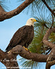 "<a href=""http://www.photographycorner.com/forum/showthread.php?t=107060"">Bald Eagle</a> by <a href=""http://www.photographycorner.com/forum/member.php?u=17674"">Eric Diller</a>"