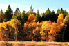 "<a href=""http://www.photographycorner.com/forum/showthread.php?t=107118"">Southern Oregon Cascade Autumn</a> by <a href=""http://www.photographycorner.com/forum/member.php?u=20067"">campc</a>"