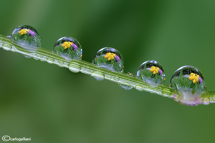 """<a href=""""http://www.photographycorner.com/forum/showthread.php?t=104558"""">Spring in Drops</a> by <a href=""""http://www.photographycorner.com/forum/member.php?u=20004"""">carlogalliani</a>"""