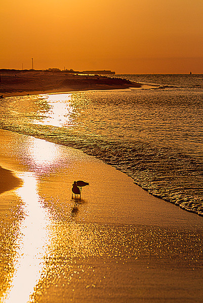 """<a href=""""http://www.photographycorner.com/forum/showthread.php?t=106726"""">Sunrise on the Beach</a> by <a href=""""http://www.photographycorner.com/forum/member.php?u=75"""">ohenry</a>"""