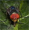 "<a href=""http://www.photographycorner.com/premiere-membership"">A Little FLY Tongue (Premiere Project #137 Winner)</a> by <a href=""http://www.photographycorner.com/forum/member.php?u=12688"">jaharris1001</a>"