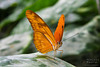 "<a href=""http://www.photographycorner.com/forum/showthread.php?t=106042"">Butterflies</a> by <a href=""http://www.photographycorner.com/forum/member.php?u=22720"">VTerlakyPhoto</a>"