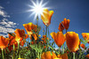 "<a href=""http://www.photographycorner.com/galleries/showphoto.php/photo/51836"">Wild Flowers in Sunny Day</a> by <a href=""http://www.photographycorner.com/forum/member.php?u=17791"">william88</a>"