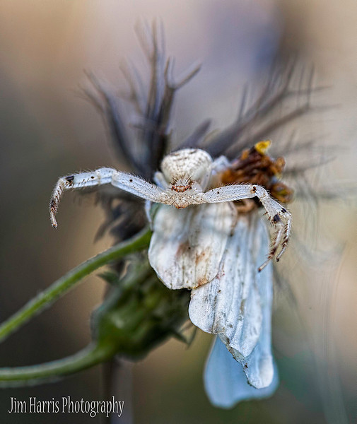 """<a href=""""http://www.photographycorner.com/forum/showthread.php?t=111677"""">Patiently Waiting</a> by <a href=""""http://www.photographycorner.com/forum/member.php?u=12688"""">jaharris1001</a>"""