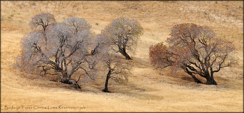 "<a href=""http://www.photographycorner.com/forum/showthread.php?t=111626"">Buckeye Trees in the Hills of Contra Loma</a> by <a href=""http://www.photographycorner.com/forum/member.php?u=11348"">jerrywb</a>"