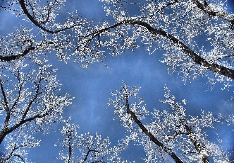 "<a href=""http://www.photographycorner.com/forum/showthread.php?t=107851"">Skyward</a> by <a href=""http://www.photographycorner.com/forum/member.php?u=13328"">chellezfotoz</a>"