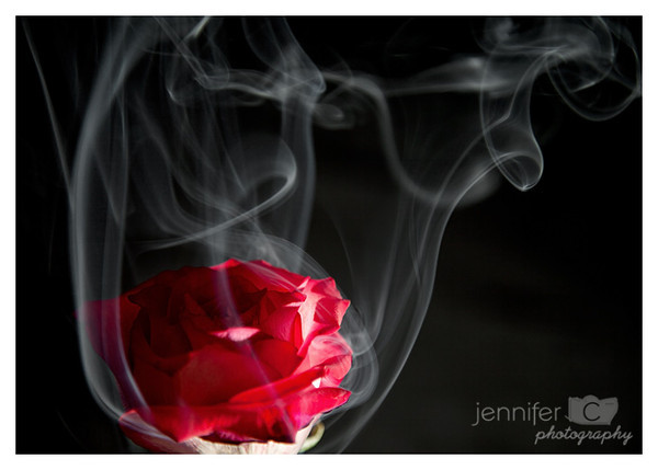 "<a href=""http://www.photographycorner.com/premiere-membership"">Smoke and Rose (Premiere Project #155 Winner)</a> by <a href=""http://www.photographycorner.com/forum/member.php?u=1496"">jenfadder</a>"