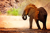 "<a href=""http://www.photographycorner.com/forum/showthread.php?t=108483"">Namibia Desert Elephants</a> by <a href=""http://www.photographycorner.com/forum/member.php?u=27203"">KarrieNien</a>"
